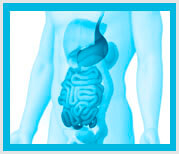 sistema digestivo acupuntura