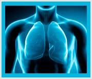 Sistema respiratorio piel acupuntura